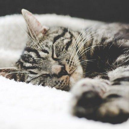 睡眠不足問題導致肥胖?-封面圖